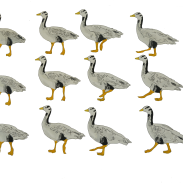 bar_headed_goose_walking_animation_frames_elephant_room_studio
