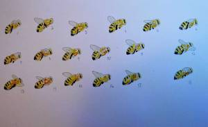 honey bee animation