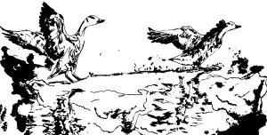 Sea-Birds-Elephant-Room-studio-Watercolor-Animations-bookcover-ink